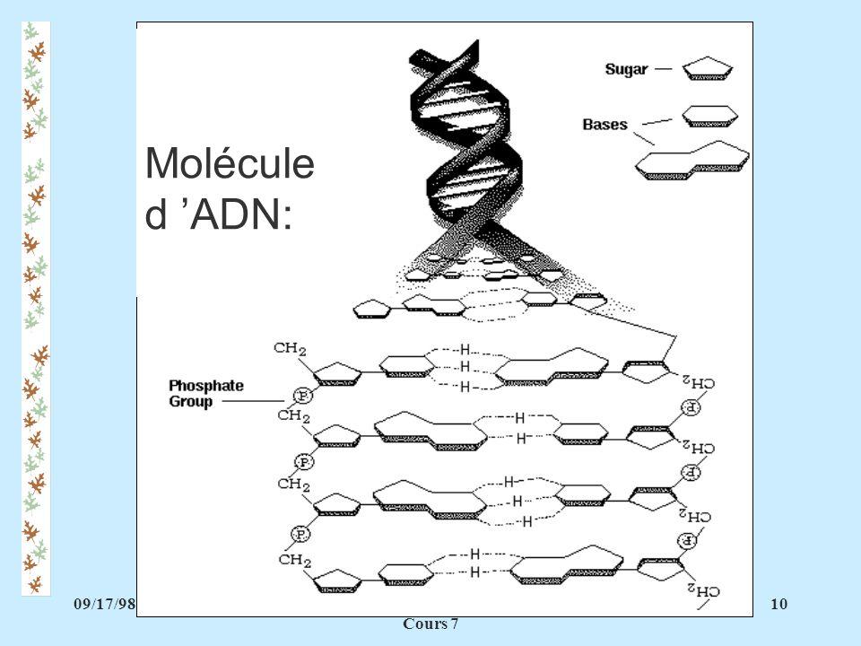 09/17/9810PAA 1140 Biochimie vétérinaire Cours 7 Molécule d ADN: