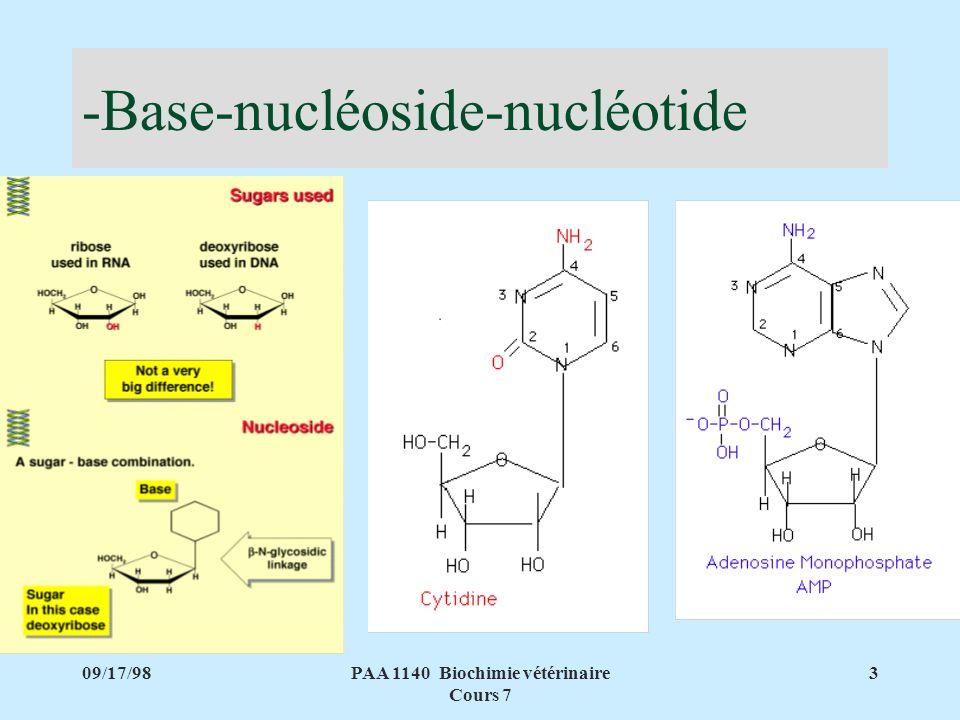 09/17/983PAA 1140 Biochimie vétérinaire Cours 7 -Base-nucléoside-nucléotide