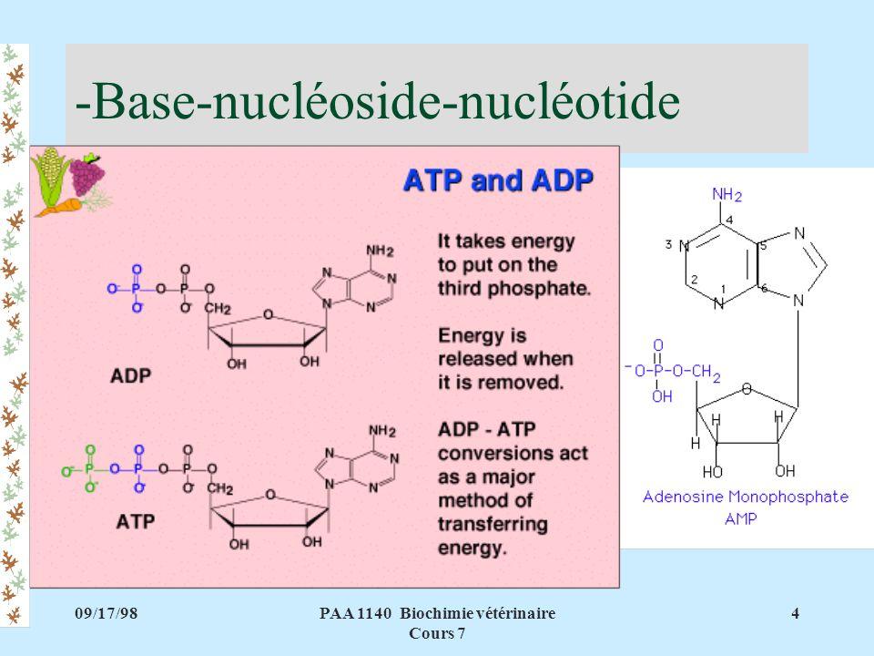 09/17/984PAA 1140 Biochimie vétérinaire Cours 7 -Base-nucléoside-nucléotide