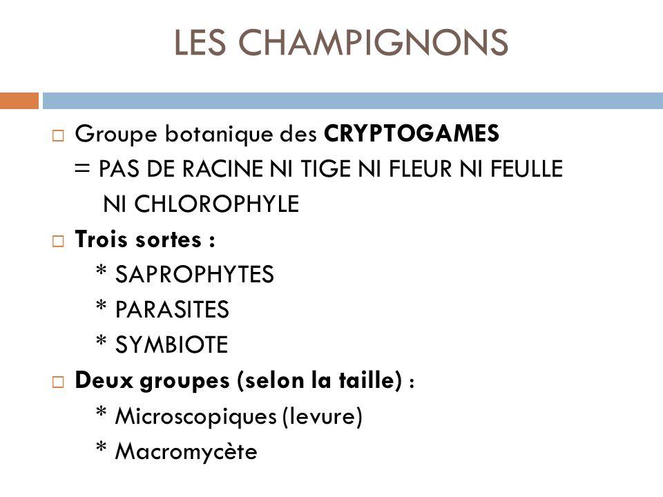 LES CHAMPIGNONS Groupe botanique des CRYPTOGAMES = PAS DE RACINE NI TIGE NI FLEUR NI FEULLE NI CHLOROPHYLE Trois sortes : * SAPROPHYTES * PARASITES * SYMBIOTE Deux groupes (selon la taille) : * Microscopiques (levure) * Macromycète