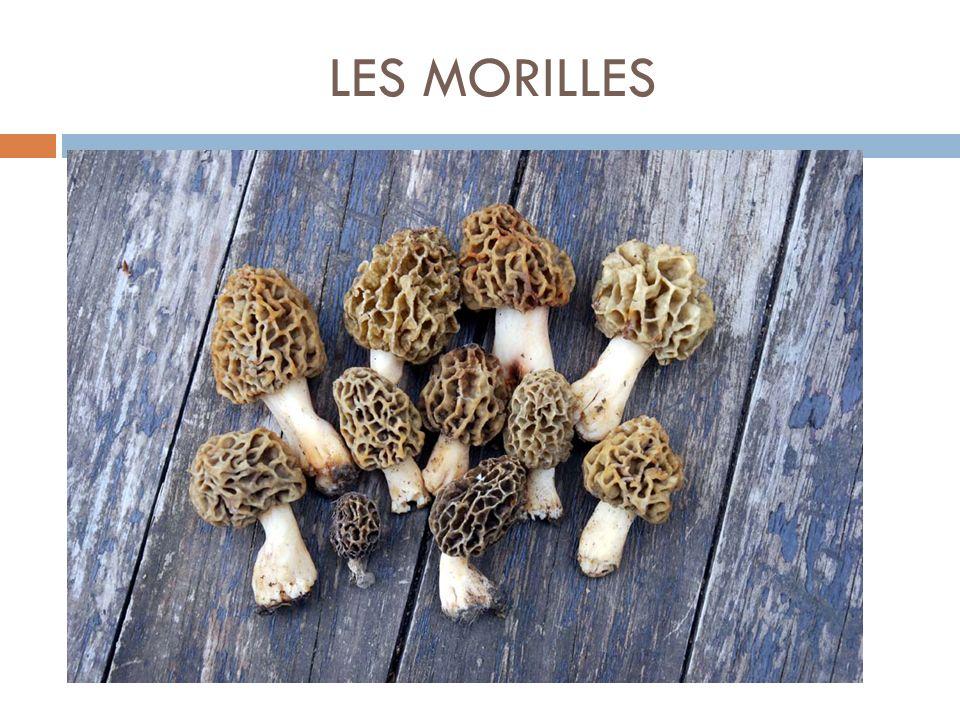 LES MORILLES