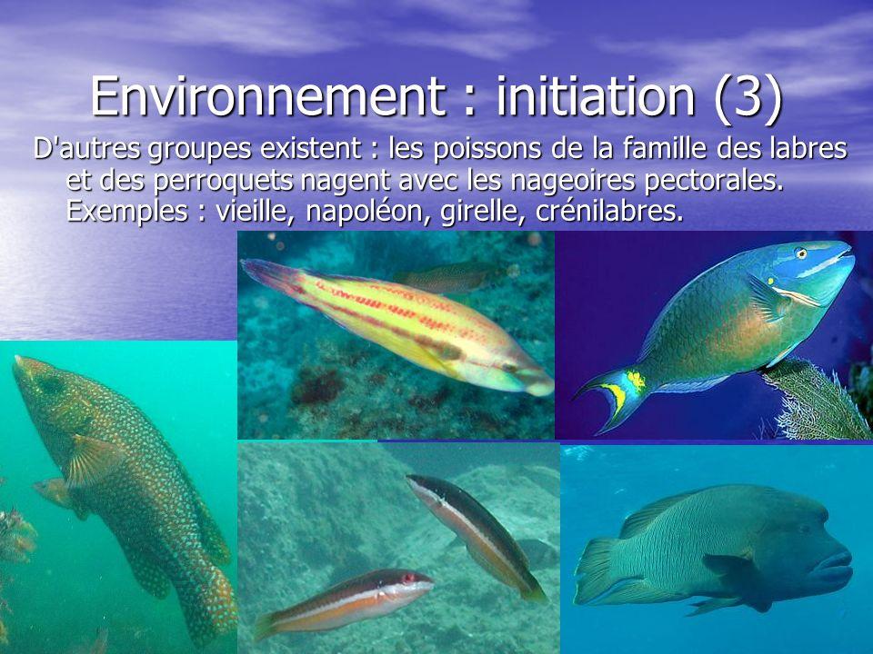 Environnement : initiation (3) D'autres groupes existent : les poissons de la famille des labres et des perroquets nagent avec les nageoires pectorale