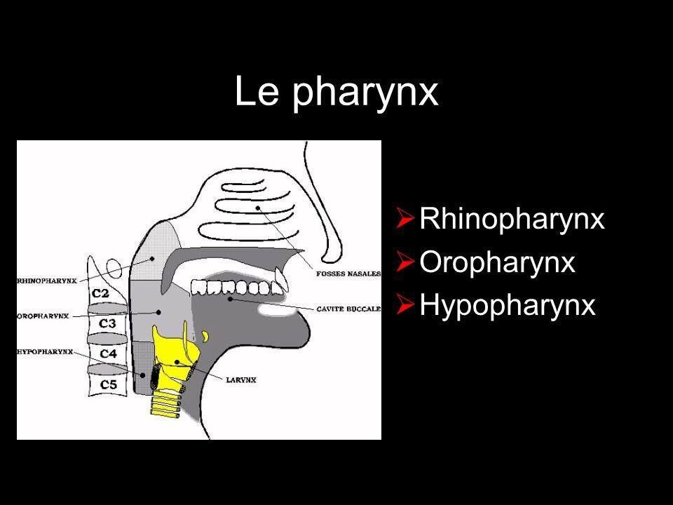 Loropharynx Loge amygdalienne Sillon amygdalo-glosse Base de langue Vallécule Paroi pharyngée postérieure Voile luette