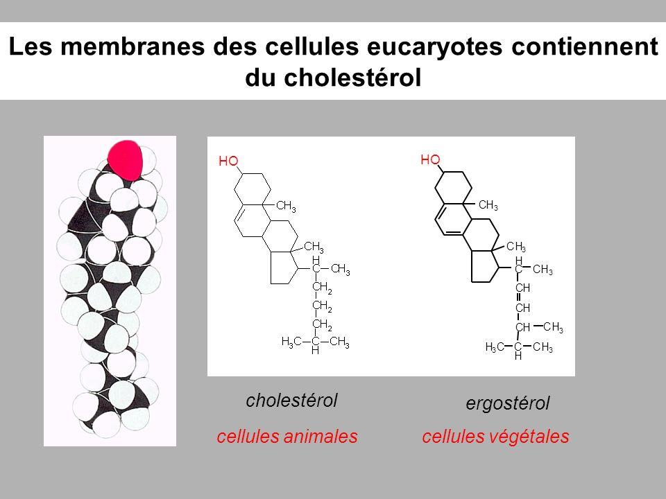 Les membranes des cellules eucaryotes contiennent du cholestérol cholestérol HO cellules animales ergostérol cellules végétales HO CH 3 CH 3 C H CH 3