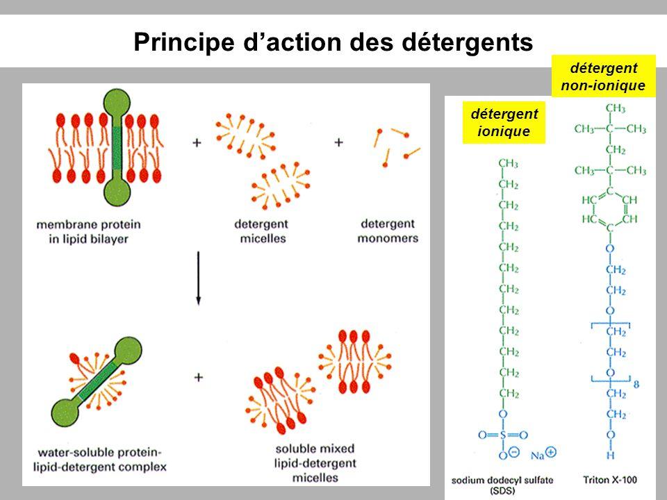 Principe daction des détergents détergent ionique détergent non-ionique