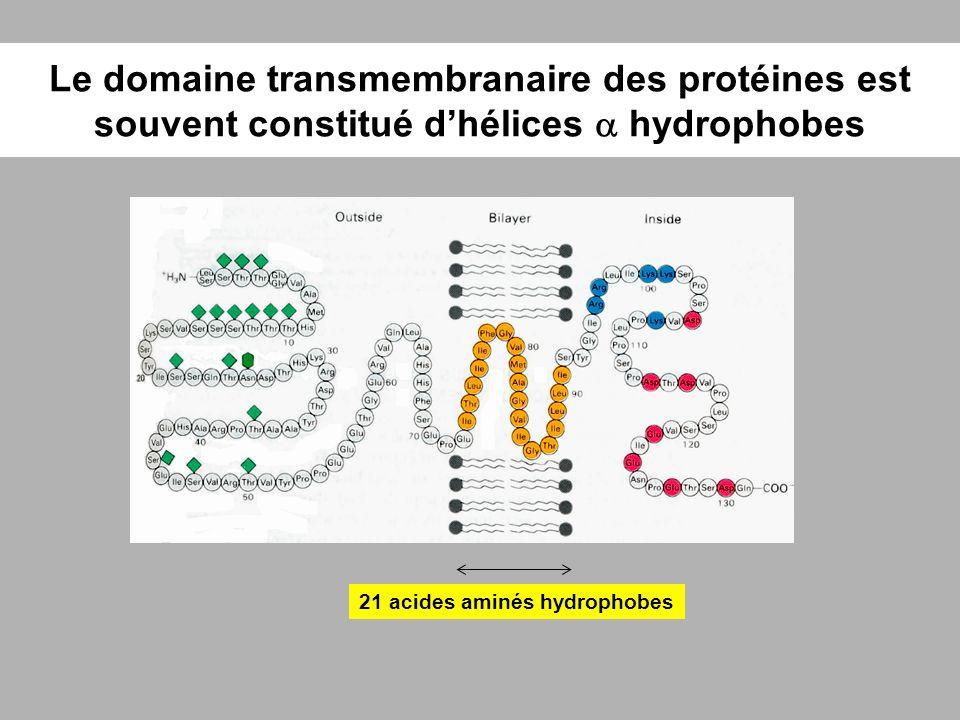 Le domaine transmembranaire des protéines est souvent constitué dhélices hydrophobes 21 acides aminés hydrophobes