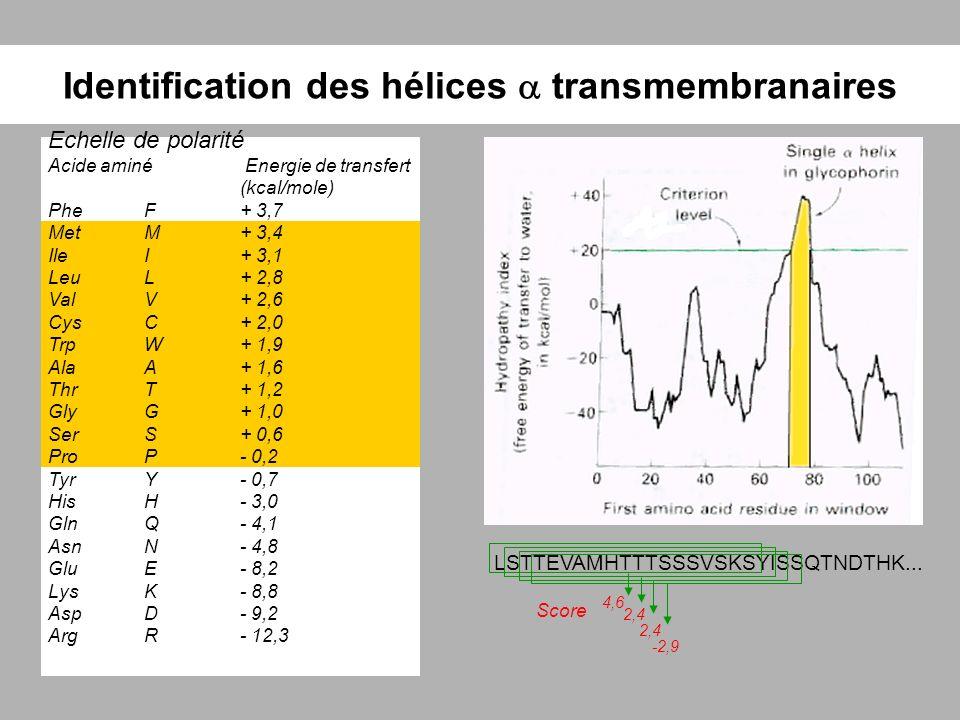 Identification des hélices transmembranaires Echelle de polarité Acide aminé Energie de transfert (kcal/mole) PheF+ 3,7 MetM+ 3,4 IleI+ 3,1 LeuL+ 2,8