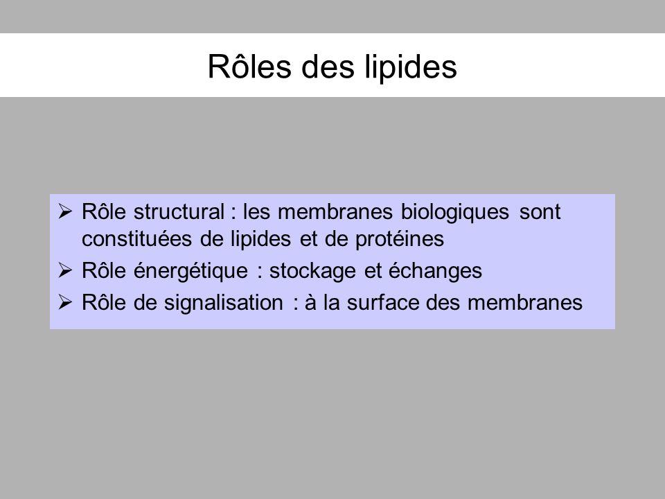 Rôles des lipides Rôle structural : les membranes biologiques sont constituées de lipides et de protéines Rôle énergétique : stockage et échanges Rôle