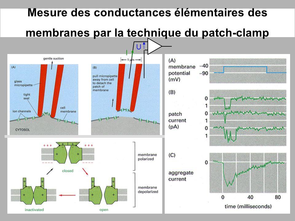Mesure des conductances élémentaires des membranes par la technique du patch-clamp U I