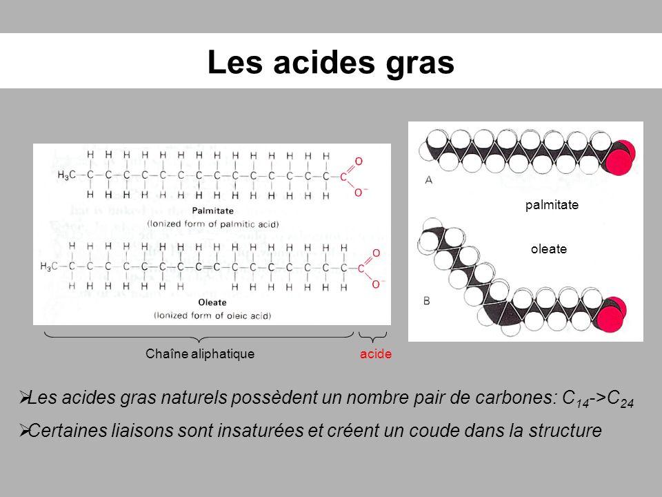 Les acides gras acideChaîne aliphatique palmitate oleate Les acides gras naturels possèdent un nombre pair de carbones: C 14 ->C 24 Certaines liaisons