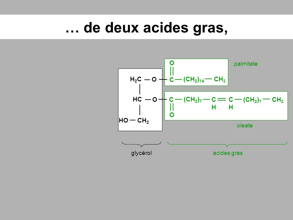 … dun phosphate glycérolacides grasphosphate HC O H2CH2C CH 2 O O-O- CH 3 (CH 2 ) 14 CHCH (CH 2 ) 7 CHCH O HOP C O C O O palmitate oleate