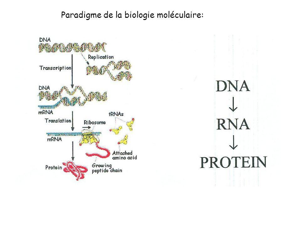 Paradigme de la biologie moléculaire: