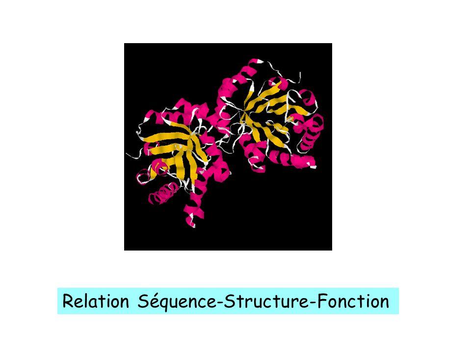 Structure 3D Relation Séquence-Structure-Fonction