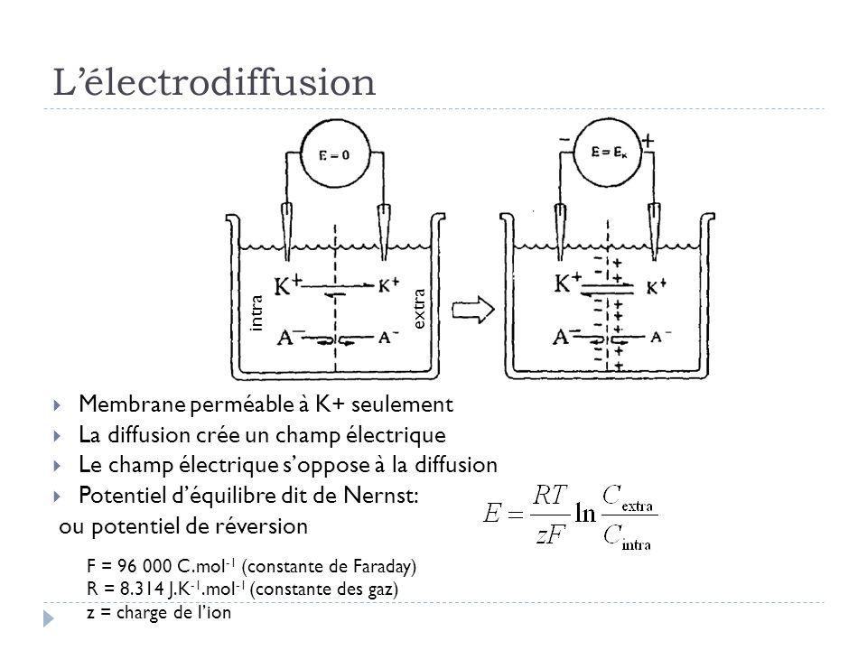 Lélectrodiffusion Membrane perméable à K+ seulement La diffusion crée un champ électrique Le champ électrique soppose à la diffusion Potentiel déquilibre dit de Nernst: ou potentiel de réversion F = 96 000 C.mol -1 (constante de Faraday) R = 8.314 J.K -1.mol -1 (constante des gaz) z = charge de lion extra intra