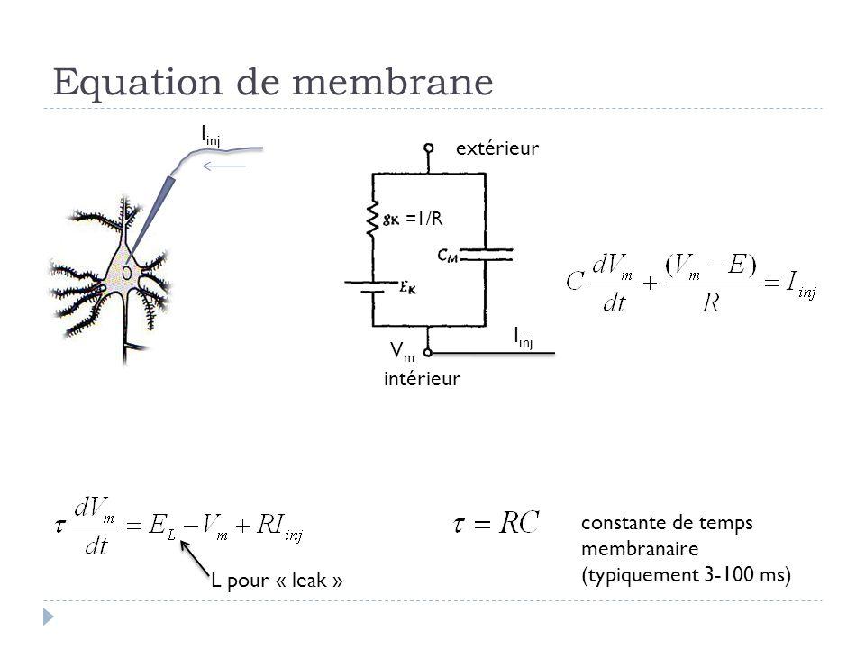 Equation de membrane I inj extérieur intérieur =1/R VmVm L pour « leak » constante de temps membranaire (typiquement 3-100 ms)