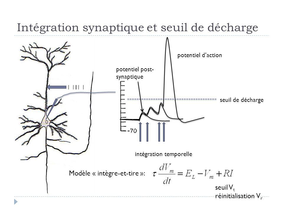 Intégration synaptique et seuil de décharge seuil de décharge potentiel daction potentiel post- synaptique intégration temporelle Modèle « intègre-et-tire »: seuil V t réinitialisation V r