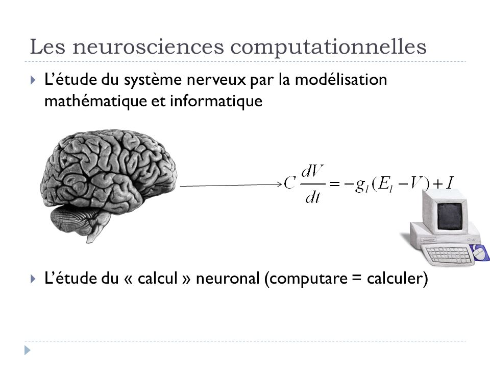 Les neurosciences computationnelles Létude du système nerveux par la modélisation mathématique et informatique Létude du « calcul » neuronal (computare = calculer)