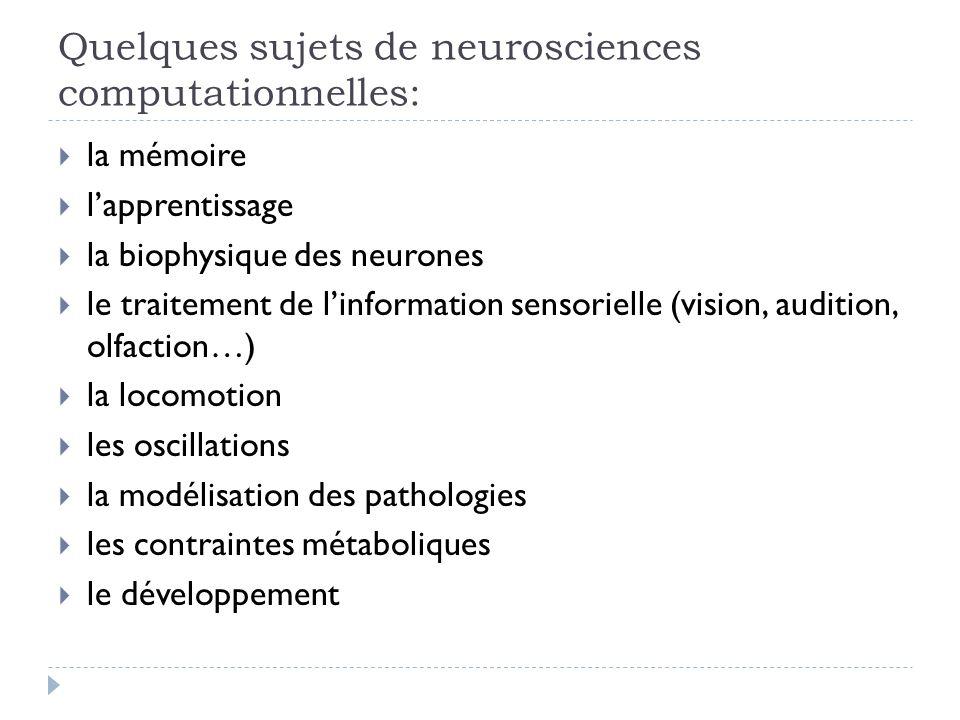 Quelques sujets de neurosciences computationnelles: la mémoire lapprentissage la biophysique des neurones le traitement de linformation sensorielle (vision, audition, olfaction…) la locomotion les oscillations la modélisation des pathologies les contraintes métaboliques le développement