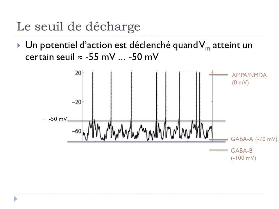 Le seuil de décharge Un potentiel daction est déclenché quand V m atteint un certain seuil -55 mV... -50 mV -50 mV GABA-B (-100 mV) GABA-A (-70 mV) AM