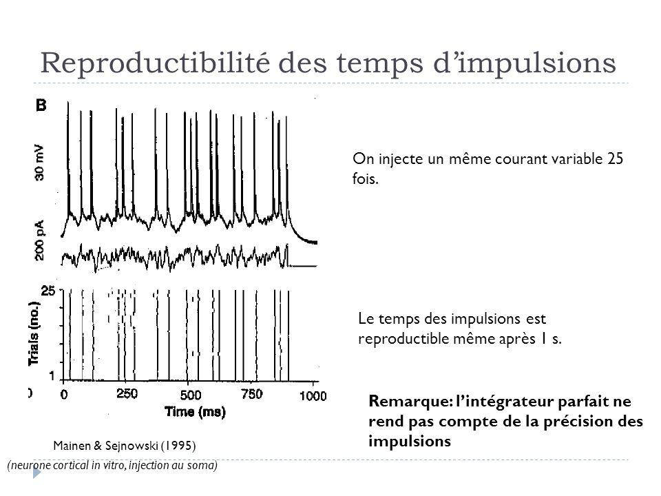 Reproductibilité des temps dimpulsions Mainen & Sejnowski (1995) On injecte un même courant variable 25 fois. Le temps des impulsions est reproductibl