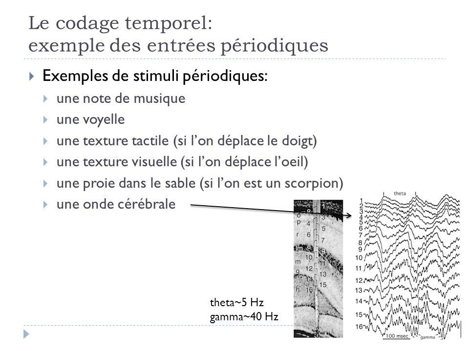 Le codage temporel: exemple des entrées périodiques Exemples de stimuli périodiques: une note de musique une voyelle une texture tactile (si lon déplace le doigt) une texture visuelle (si lon déplace loeil) une proie dans le sable (si lon est un scorpion) une onde cérébrale theta~5 Hz gamma~40 Hz