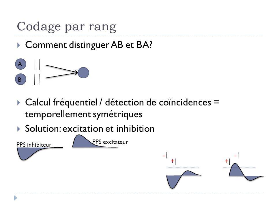 Codage par rang Comment distinguer AB et BA? Calcul fréquentiel / détection de coïncidences = temporellement symétriques Solution: excitation et inhib