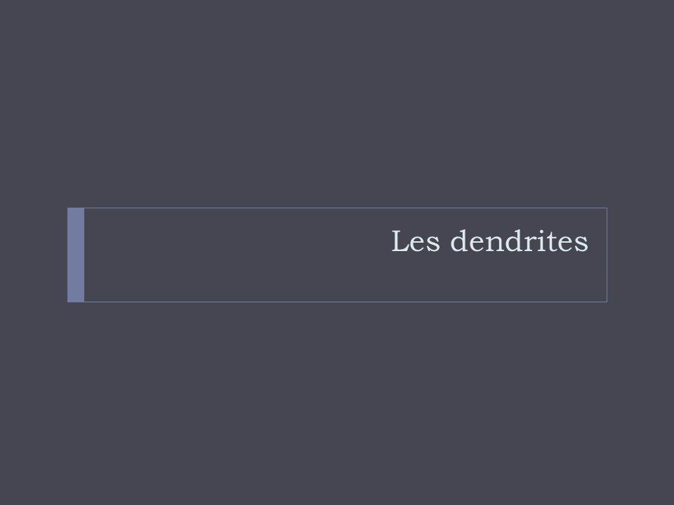 Les dendrites