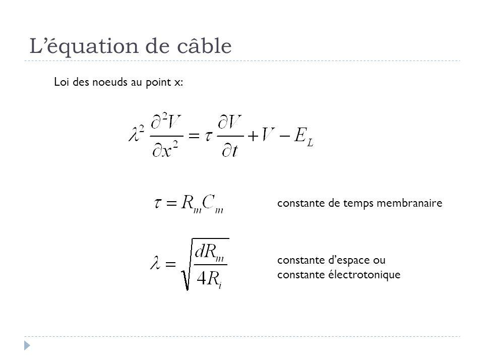 Léquation de câble Loi des noeuds au point x: constante de temps membranaire constante despace ou constante électrotonique