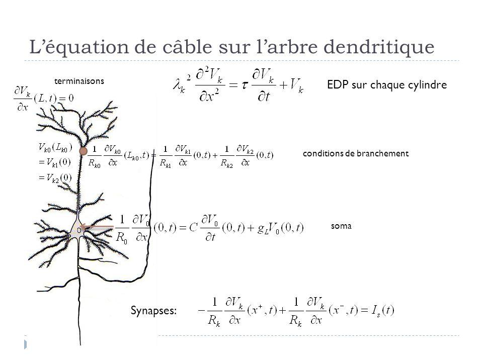 Léquation de câble sur larbre dendritique EDP sur chaque cylindre Synapses: conditions de branchement soma terminaisons