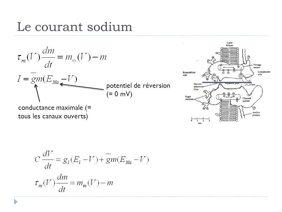 Le courant sodium conductance maximale (= tous les canaux ouverts) potentiel de réversion (= 0 mV)