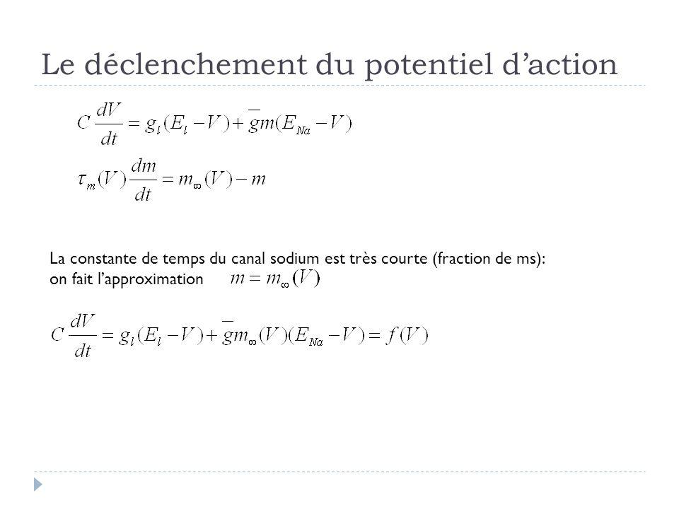 Le déclenchement du potentiel daction La constante de temps du canal sodium est très courte (fraction de ms): on fait lapproximation