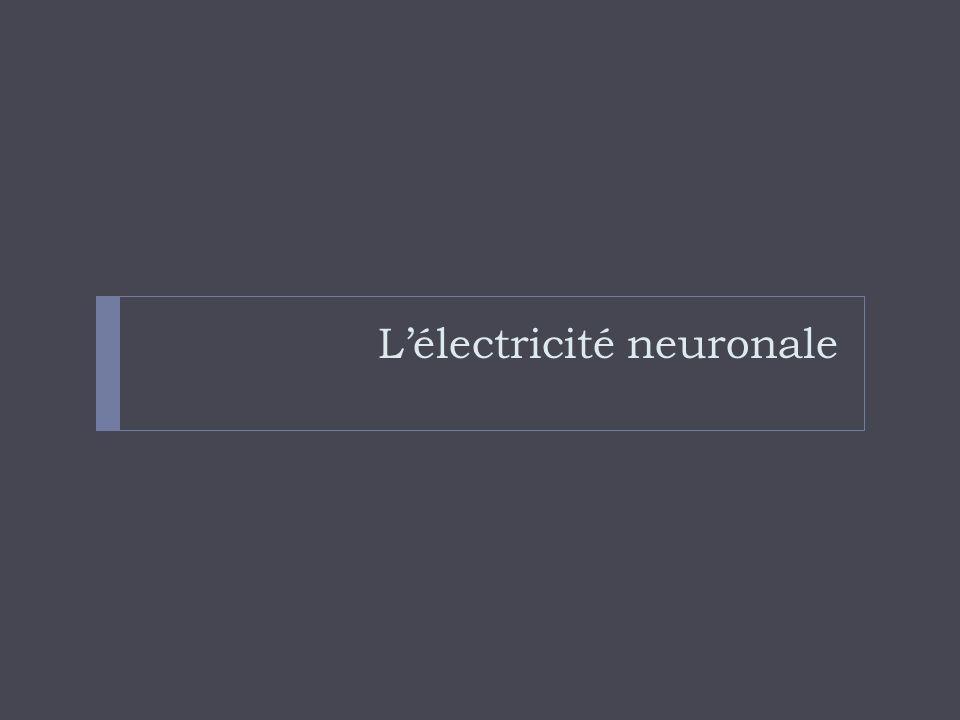 Lélectricité neuronale