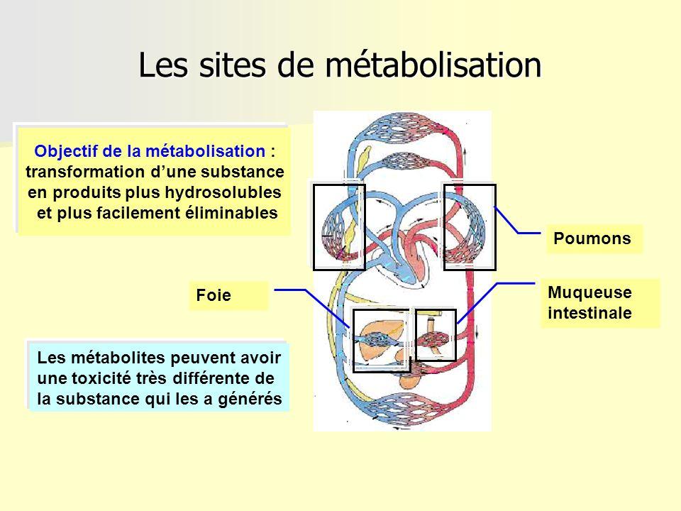 Les sites de métabolisation Muqueuse intestinale Poumons Foie Objectif de la métabolisation : transformation dune substance en produits plus hydrosolu
