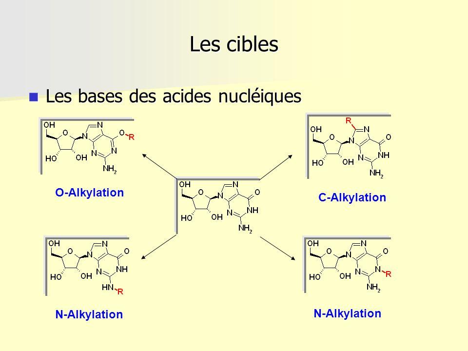 Les cibles Les bases des acides nucléiques Les bases des acides nucléiques O-Alkylation N-Alkylation C-Alkylation