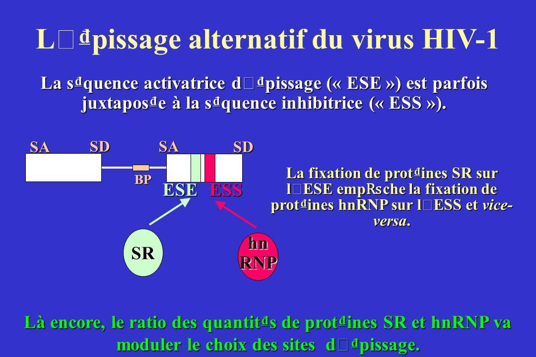L ' pissage alternatif du virus HIV-1 La squence activatrice d ' pissage (« ESE ») est parfois juxtapose à la squence inhibitrice (« ESS »).