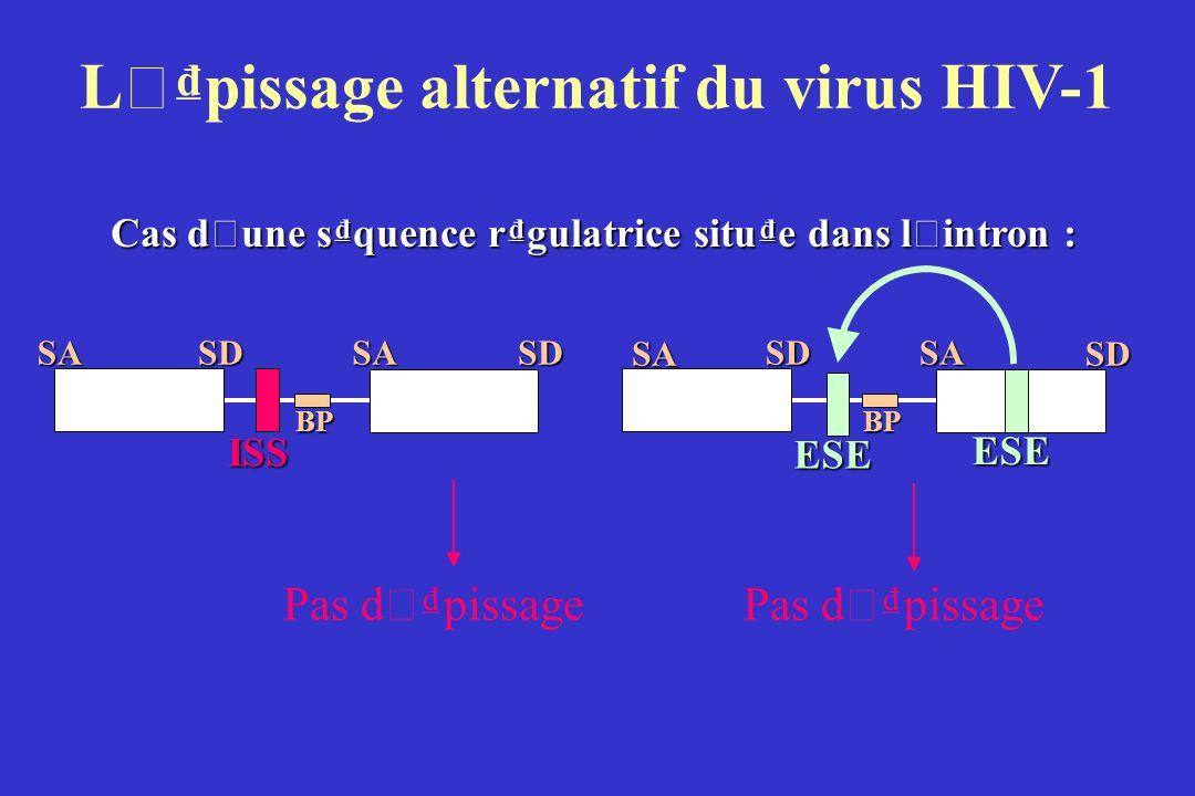 L ' pissage alternatif du virus HIV-1 Cas d ' une squence rgulatrice situe dans l ' intron : SASDSABPSD Pas d ' pissage ISS SASDSDSABP ESE ESE