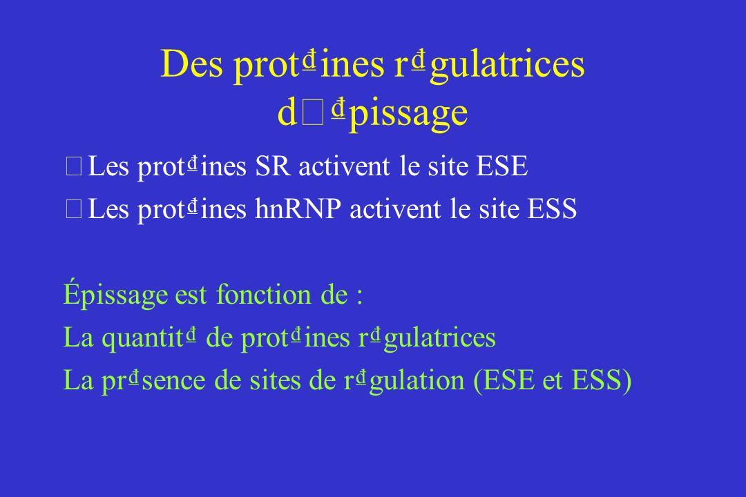 Des protines rgulatrices d ' pissage •Les protines SR activent le site ESE •Les protines hnRNP activent le site ESS Épissage est fonction de : La quantit de protines rgulatrices La prsence de sites de rgulation (ESE et ESS)