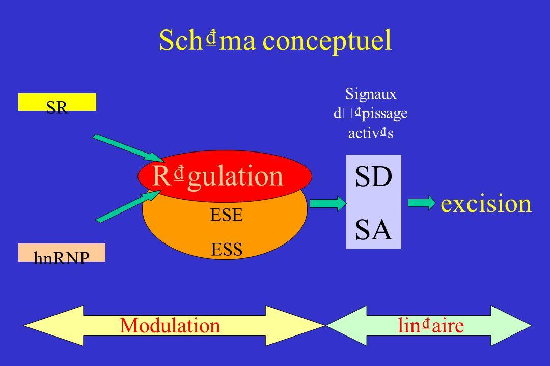 SR hnRNP Rgulation ESE ESS excision Modulationlinaire SD SA Signaux d ' pissage activs Schma conceptuel