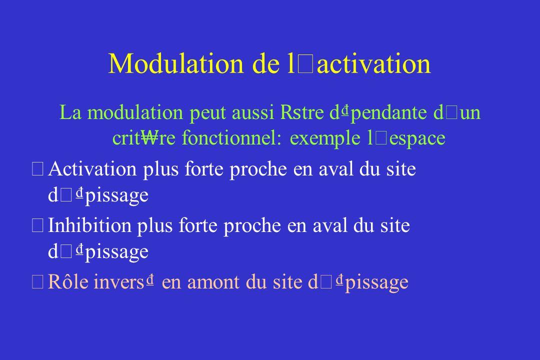 Modulation de l ' activation La modulation peut aussi tre dpendante d ' un crit re fonctionnel: exemple l ' espace Activation plus forte proche en aval du site d ' pissage Inhibition plus forte proche en aval du site d ' pissage Rôle invers en amont du site d ' pissage