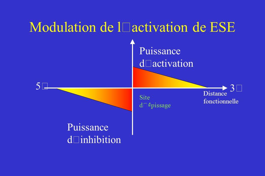 Modulation de l ' activation de ESE Puissance d ' activation Puissance d ' inhibition Distance fonctionnelle Site d ' pissage 5'5' 3'3'
