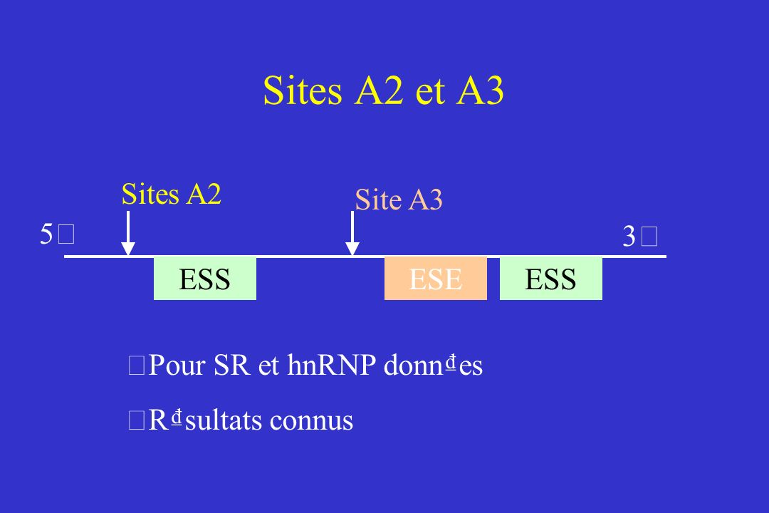 Sites A2 et A3 5'5' 3'3' ESS ESE Sites A2 • Pour SR et hnRNP donnes • Rsultats connus Site A3