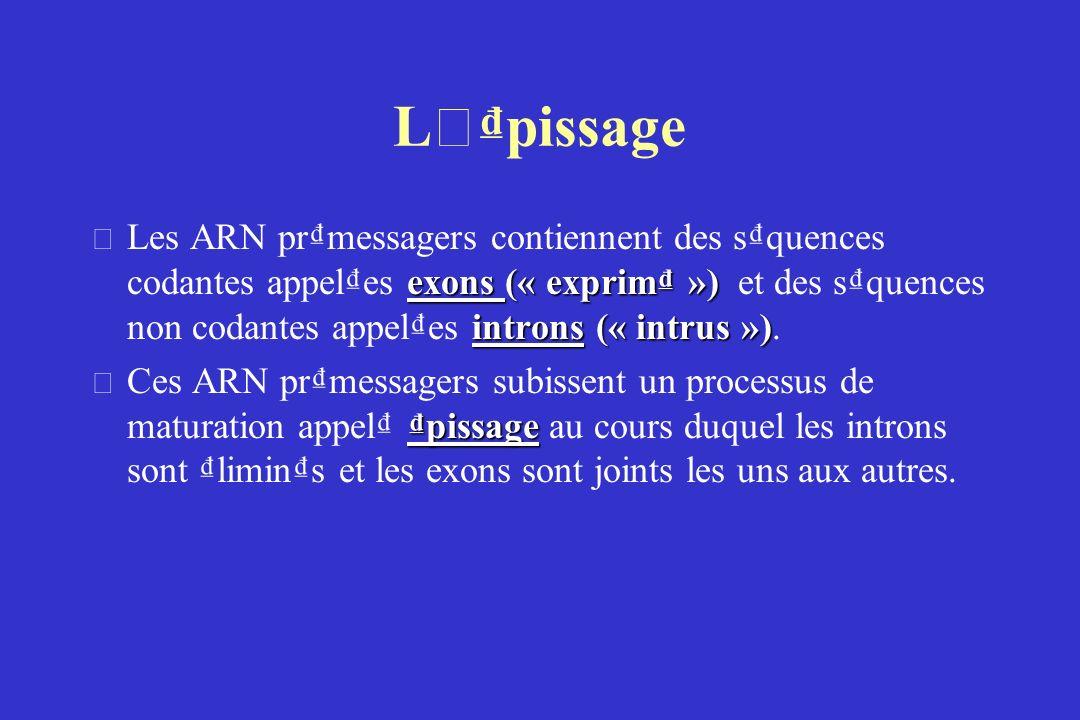 L ' pissage exons (« exprim ») introns (« intrus ») • Les ARN prmessagers contiennent des squences codantes appeles exons (« exprim ») et des squences non codantes appeles introns (« intrus »).