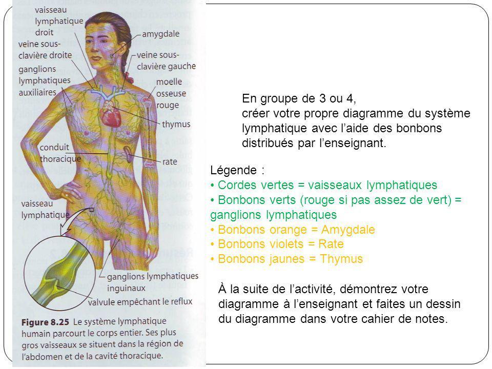 Activité En groupe de 3 ou 4, créer votre propre diagramme du système lymphatique avec laide des bonbons distribués par lenseignant. Légende : Cordes
