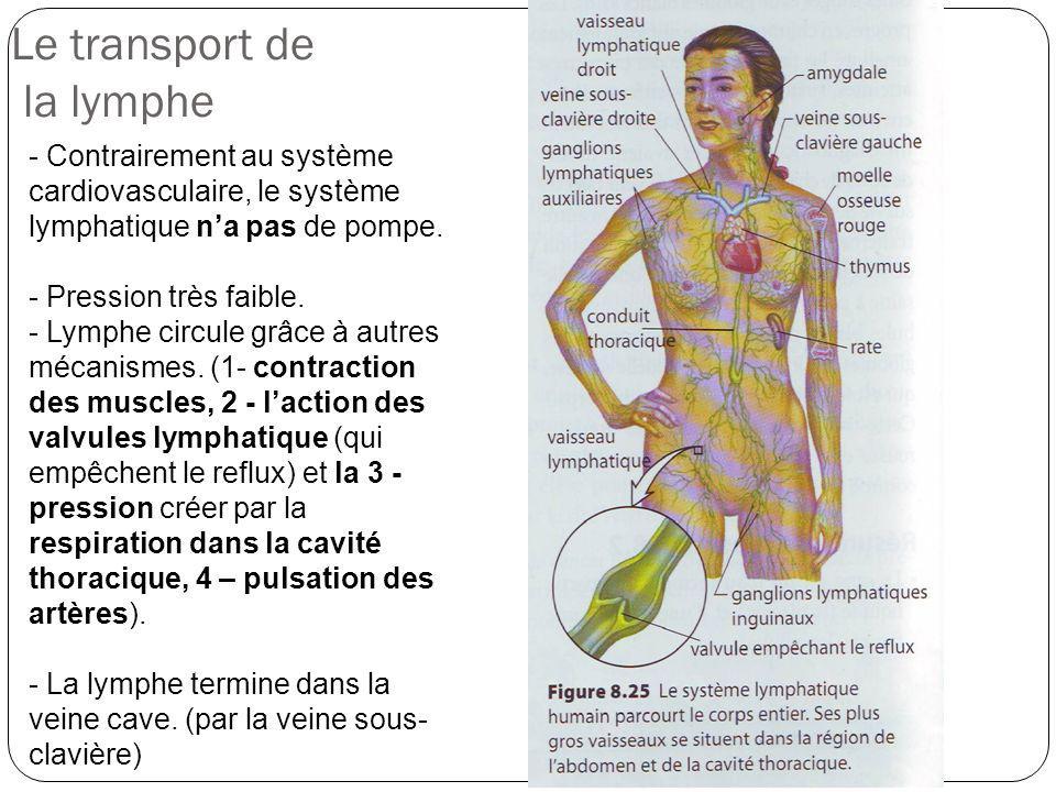 Le transport de la lymphe - Contrairement au système cardiovasculaire, le système lymphatique na pas de pompe. - Pression très faible. - Lymphe circul