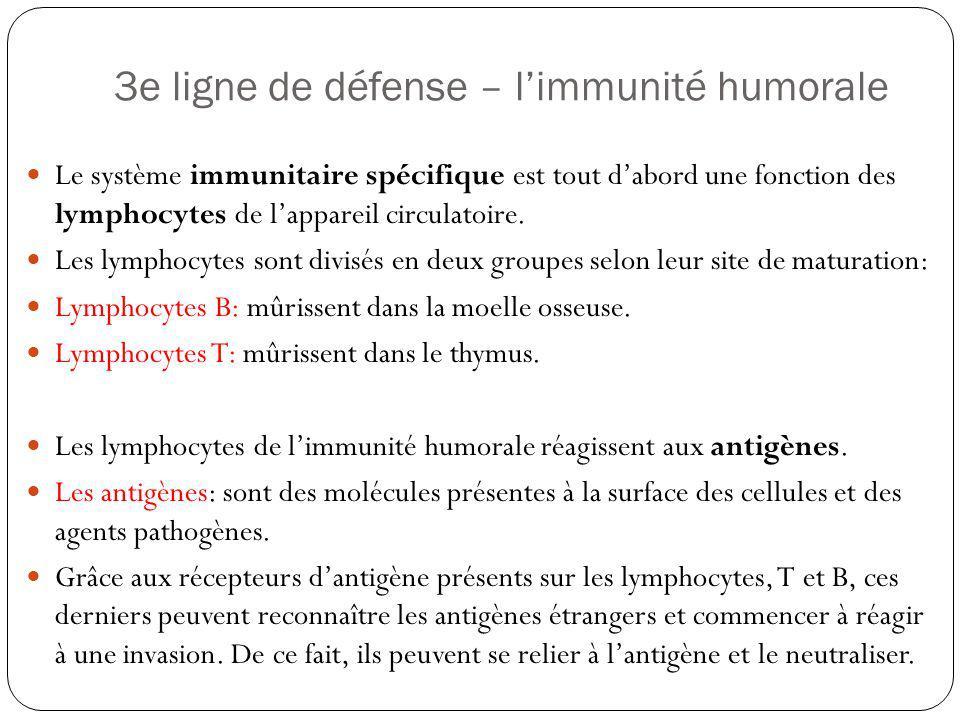 3e ligne de défense – limmunité humorale Le système immunitaire spécifique est tout dabord une fonction des lymphocytes de lappareil circulatoire. Les