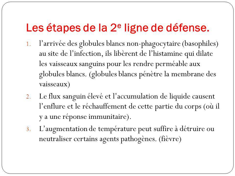 Les étapes de la 2 e ligne de défense. 1. larrivée des globules blancs non-phagocytaire (basophiles) au site de linfection, ils libèrent de lhistamine