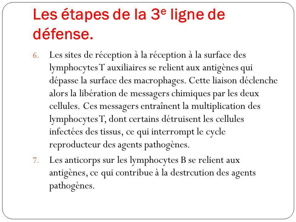 Les étapes de la 3 e ligne de défense. 6. Les sites de réception à la réception à la surface des lymphocytes T auxiliaires se relient aux antigènes qu