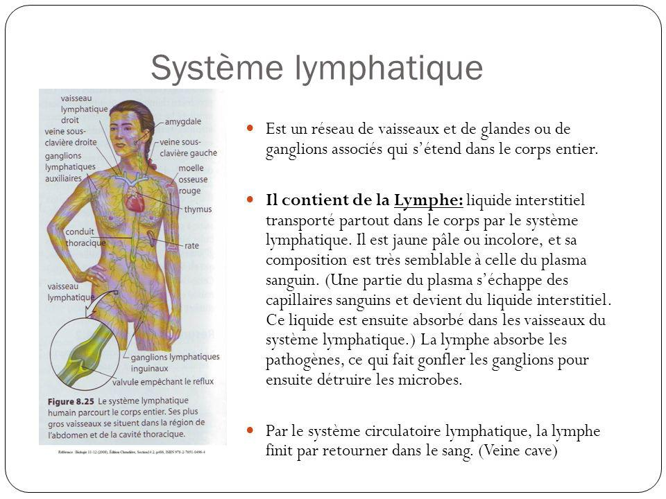 Système lymphatique Est un réseau de vaisseaux et de glandes ou de ganglions associés qui sétend dans le corps entier. Il contient de la Lymphe: liqui