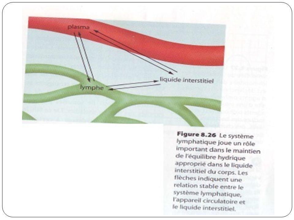 Les étapes de la 2 e ligne de défense.1.