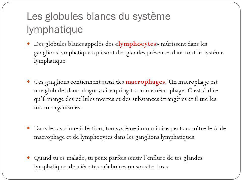 Les globules blancs du système lymphatique Des globules blancs appelés des «lymphocytes» mûrissent dans les ganglions lymphatiques qui sont des glande
